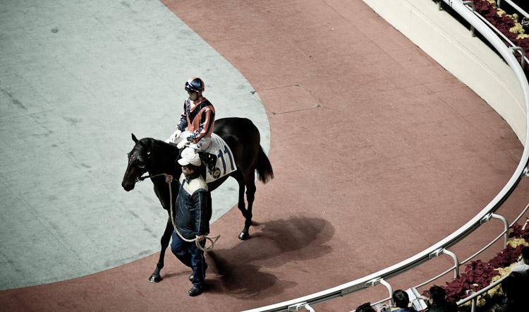HK horserace